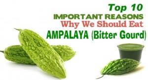 ampalaya banner
