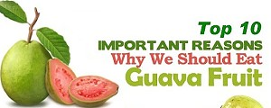 Top 10 Health Benefits of Guava Fruit