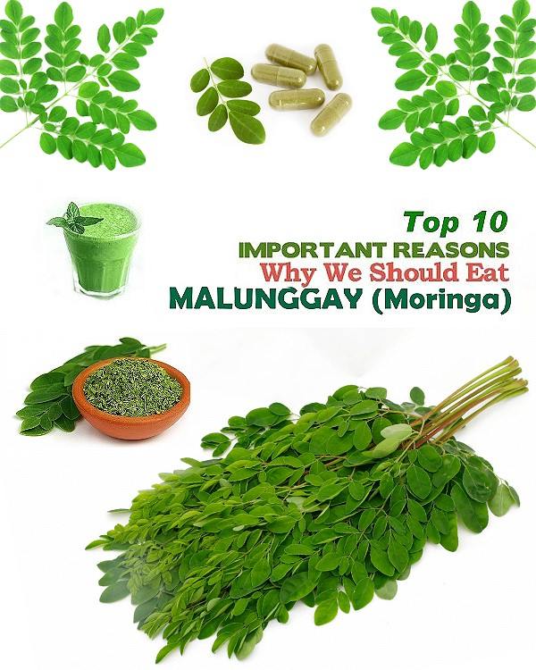 Top 10 Health Benefits of Malunggay