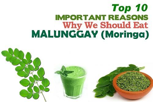 Top 10 health benefits of malunggay