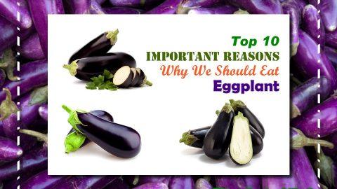 Top 10 Eggplant Health Benefits