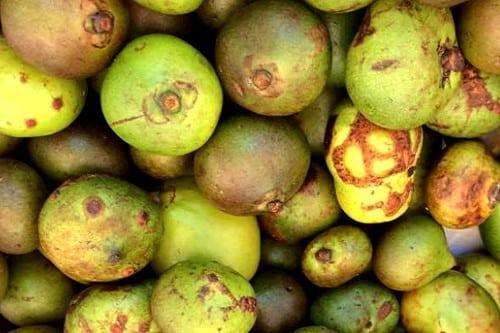 Batwan Fruit